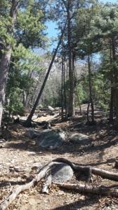 Climbers' trail Ernie Maxwell Trail